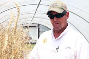 A Clemson University research scientist renowned for his role in reviving the original Southern peanut crop from only a handful of seeds has been elected president of the Carolina Gold Rice...